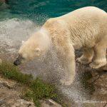 Un photojournaliste en vacance au zoo de Saint-Félicien